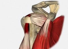 Patología del Tendón del Bíceps