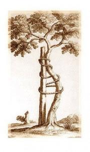 Grabado árbol traumatología